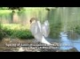 Spring of Love - Wedding Reception Music