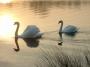 Swan Lake - Wedding Dinner Music